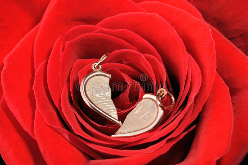 Broken gold heart in a red rose royalty free stock images