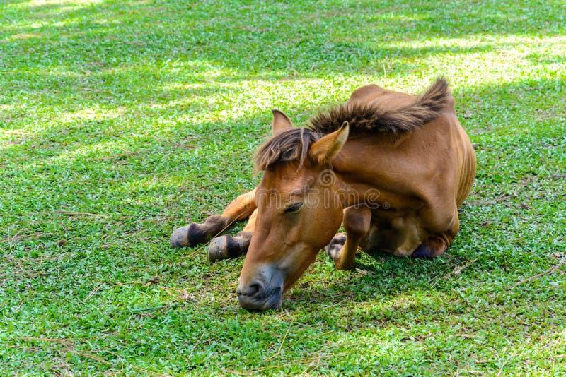 Broken leg horse eating grass. In a farm stock photos