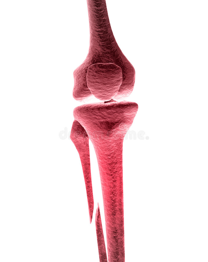 Broken Leg Pain. Highly detailed model of broken leg stock illustration