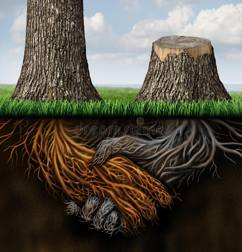 Broken Partnership. Problems as two trees with roots shaped as a business handshake with one tree cut down and the root rotting as a concept of a lost or royalty free illustration