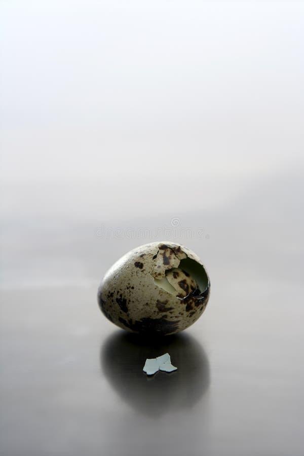 Broken quail egg, new baby bird will born stock photos
