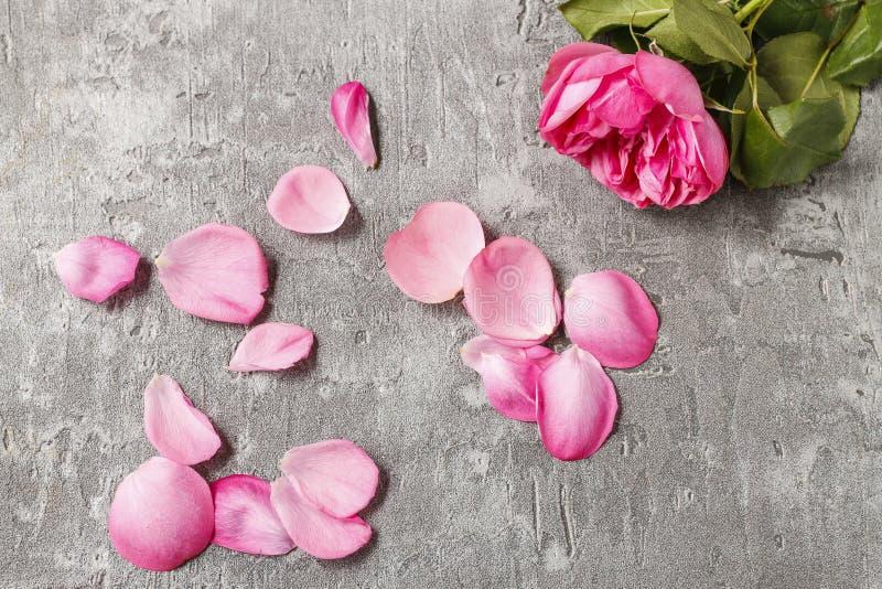 Broken rose - symbol of broken love stock photography