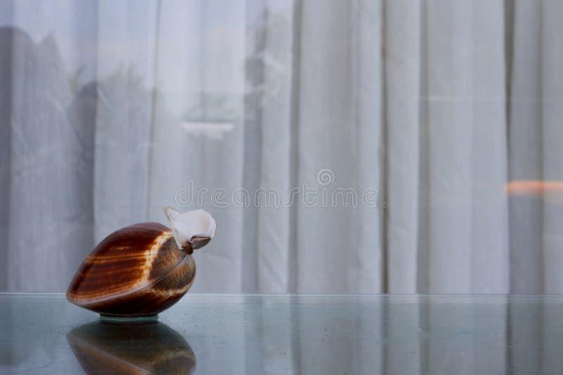 Broken Shellfish on glass top table stock images