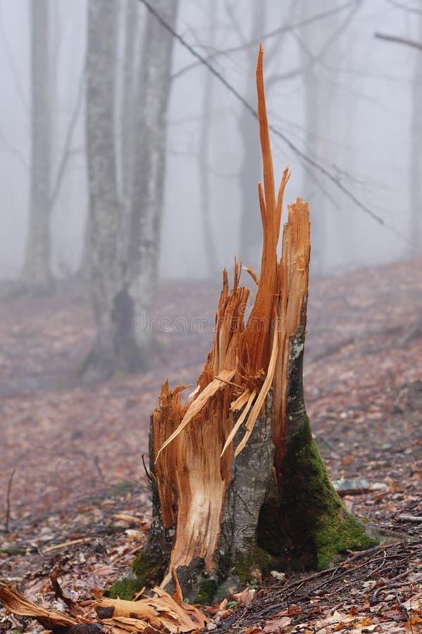 Free Broken Stump. Royalty Free Stock Photography - 5070437