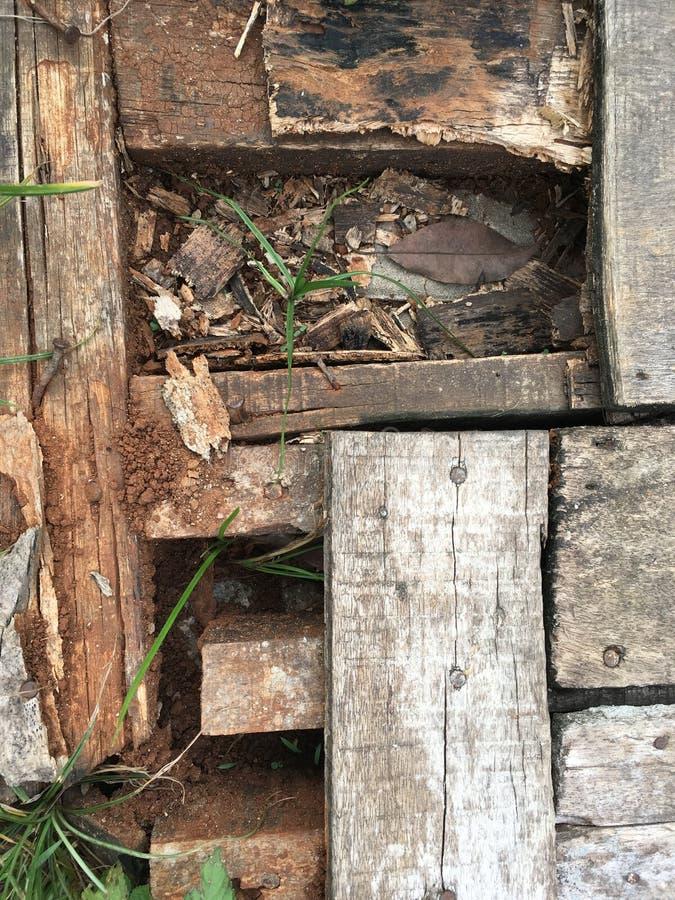 broken trä fotografering för bildbyråer