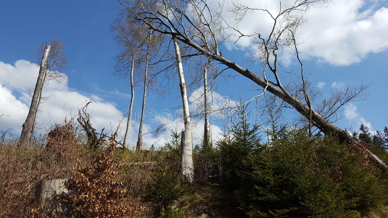 broken tree arkivbilder