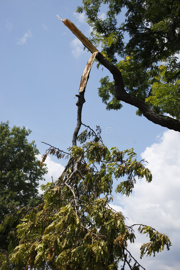 Broken tree limb. After a storm royalty free stock photos