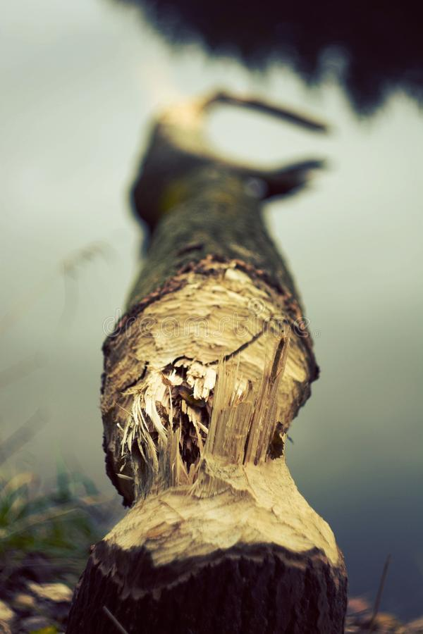The broken tree stock images