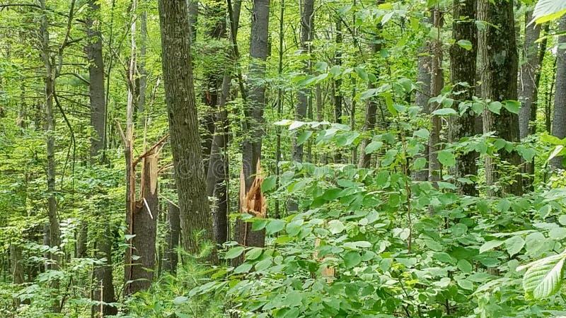 Broken trees from storm damage stock photos