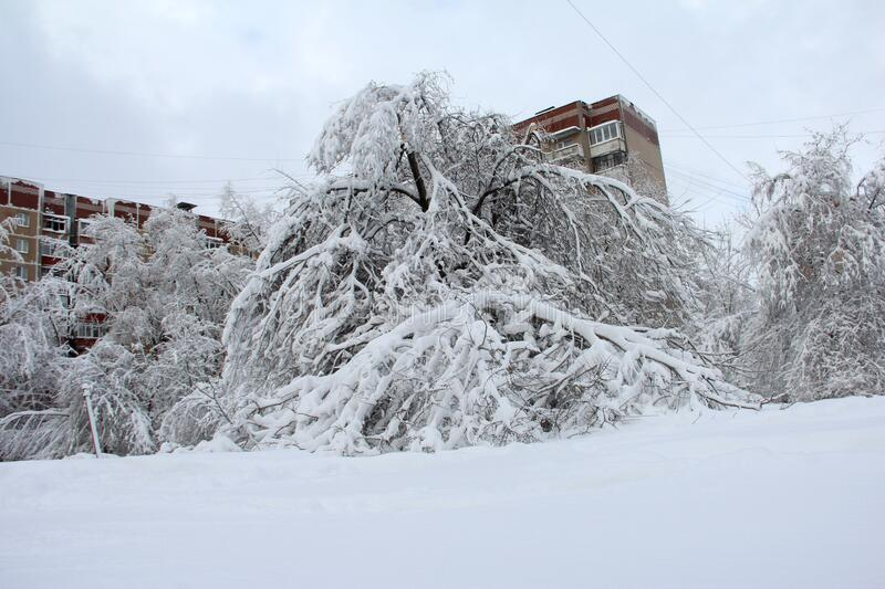 Broken trees from the wet snow. Natural disasters of Donbass.  royalty free stock photos