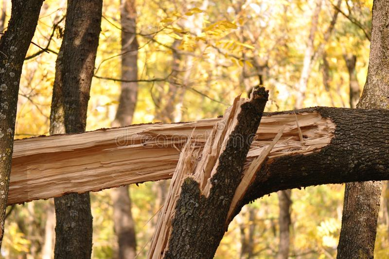 broken treestam arkivbilder