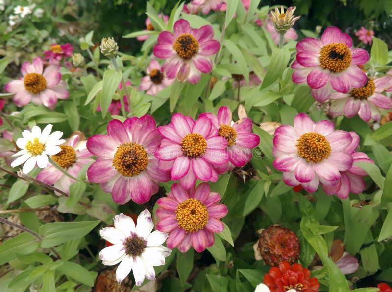 Brokiga blommor royaltyfria foton