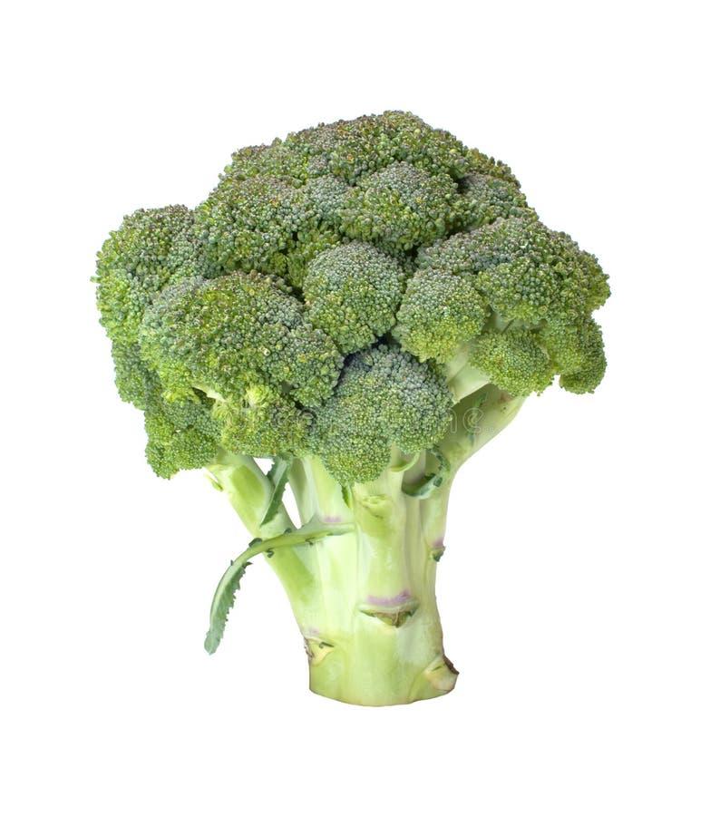 Brokkoli. lizenzfreies stockfoto