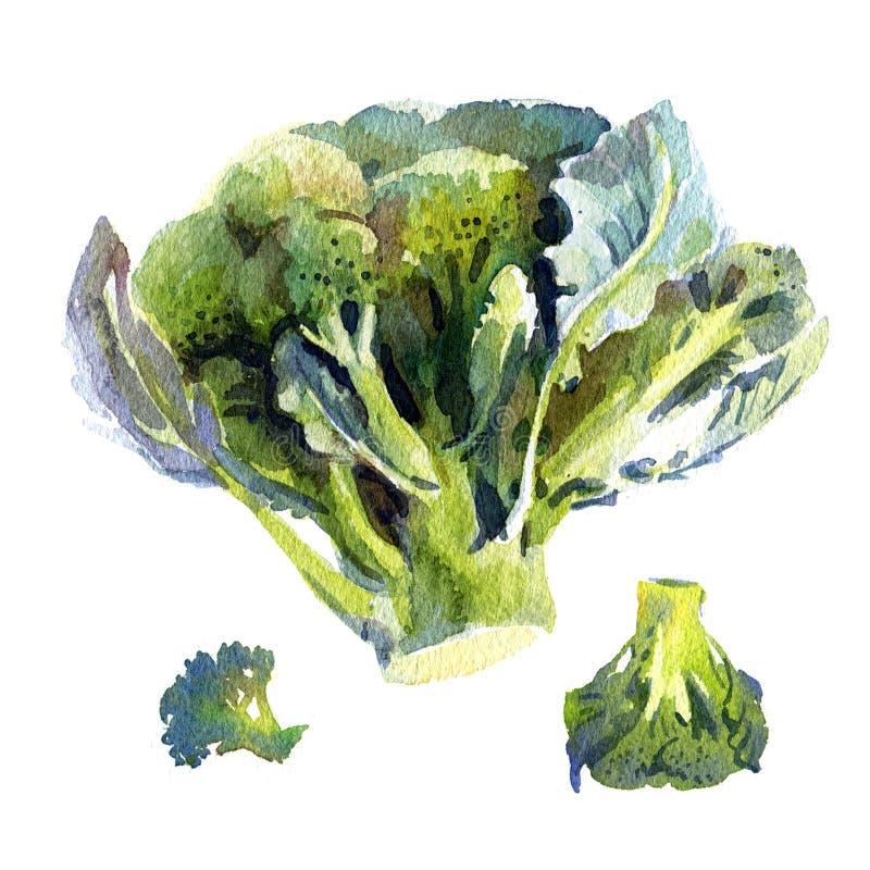 Brokkoli, Aquarellillustration stock abbildung