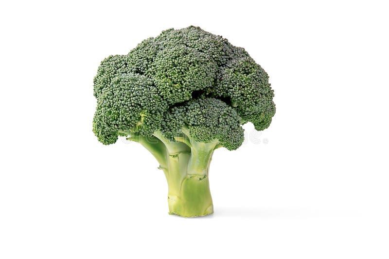 Brokkoli-Kopf auf einem weißen Hintergrund lizenzfreies stockbild