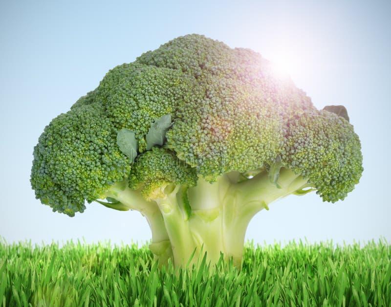 Brokkoli ile ilgili görsel sonucu