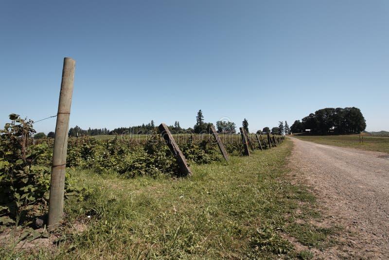 Brombeerebüsche entlang einem Bauernhofweg lizenzfreie stockbilder