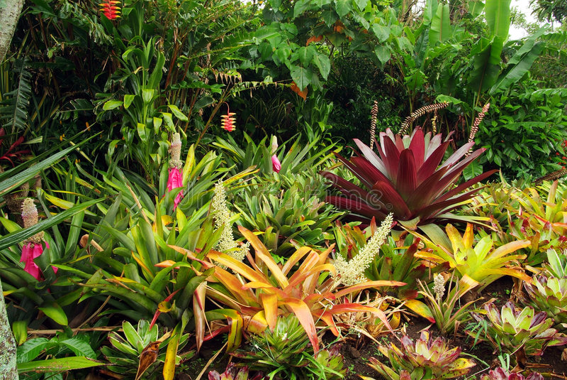 bromeliad κήπος στοκ φωτογραφία