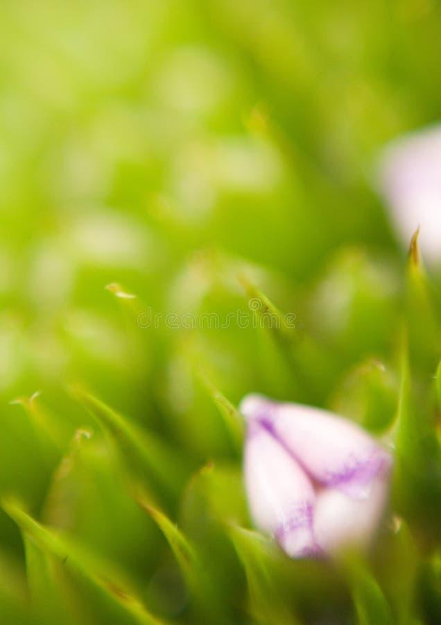 Bromeliad stock photography