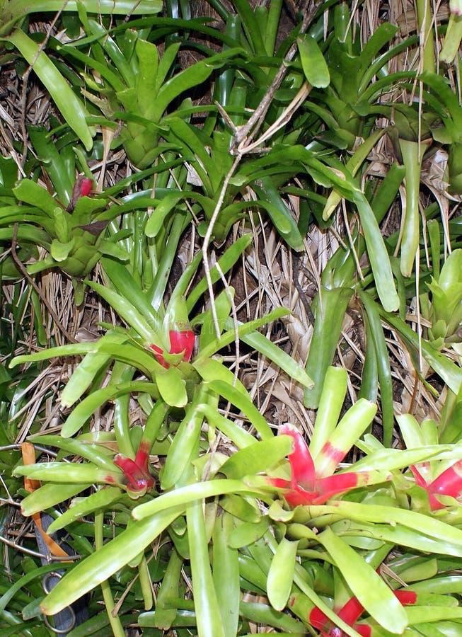 Bromeliad roślina i kwiat zdjęcie royalty free