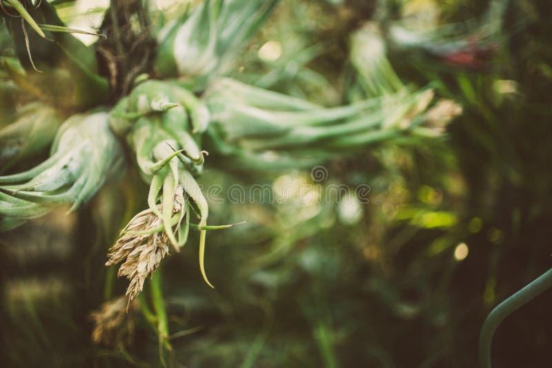 Bromeliad szczegół w tropikalnym ogródzie botanicznym fotografia royalty free