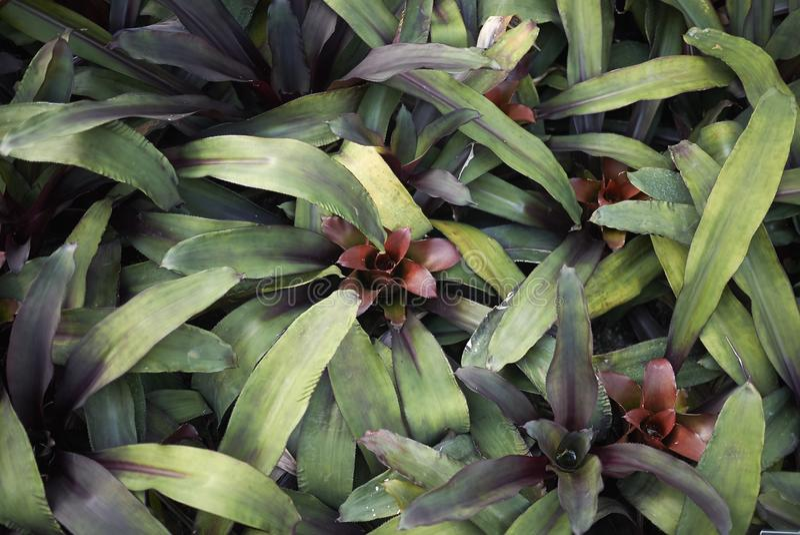 Bromeliads种植特写镜头 免版税图库摄影