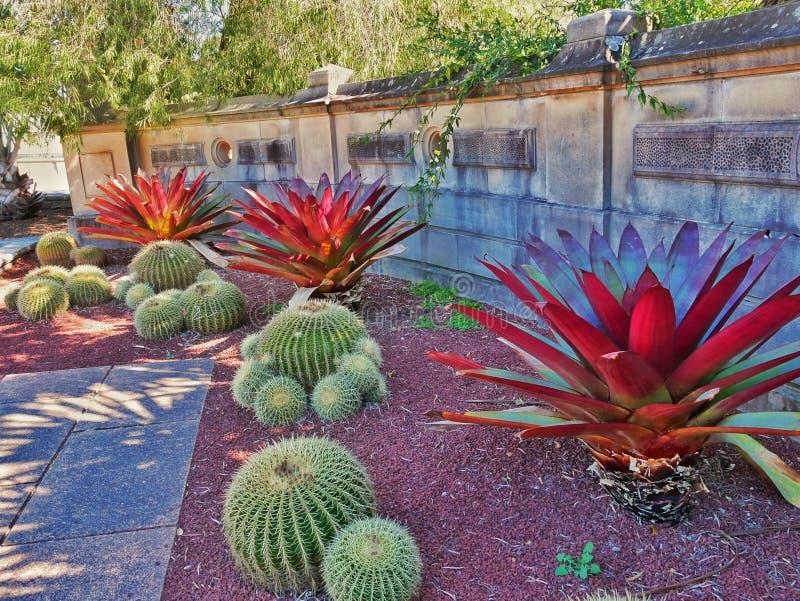 Bromelias y plantas del cactus foto de archivo libre de regalías