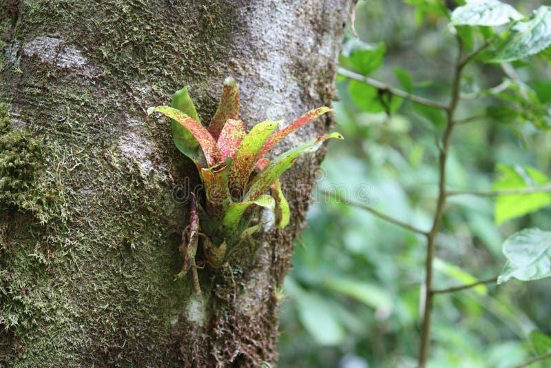 Bromelie auf einem Baum lizenzfreies stockbild