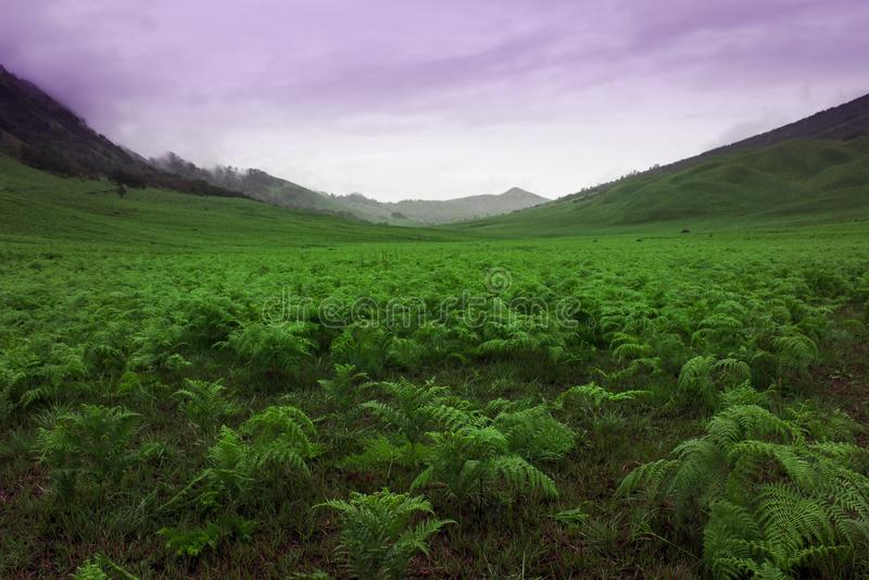 Bromo tengger semeru national park, Indonesia royalty free stock photos