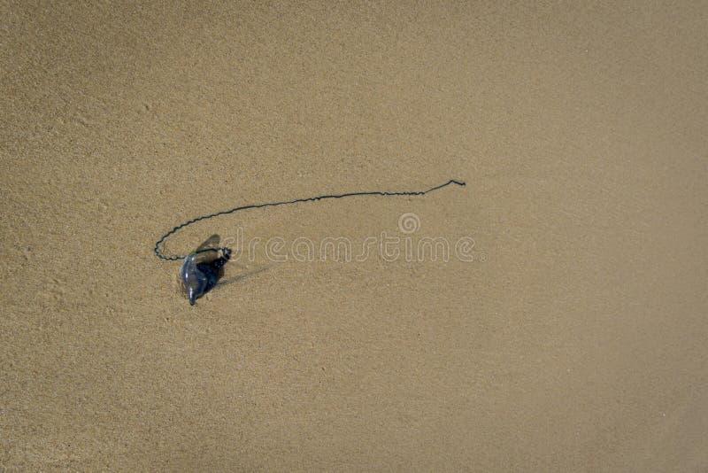 Bromvlieg Jelly Fish royalty-vrije stock afbeeldingen