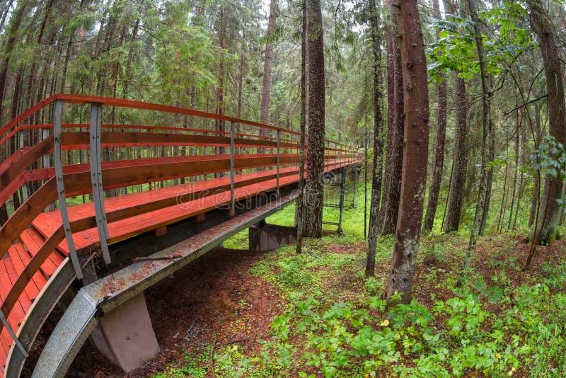 Bron g?r in i skogen royaltyfri foto