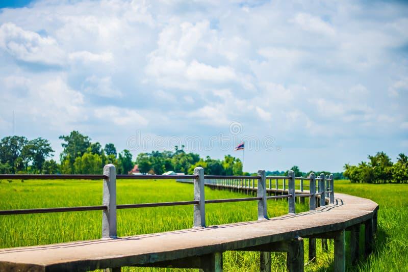 Bron och risfälten royaltyfri foto