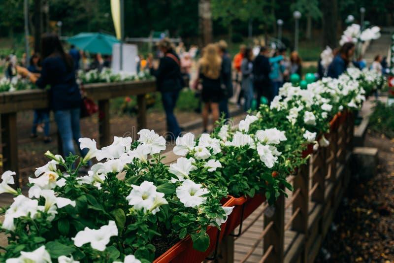 Bron parkerar offentligt med blommor som går folk på suddig bakgrund royaltyfri fotografi