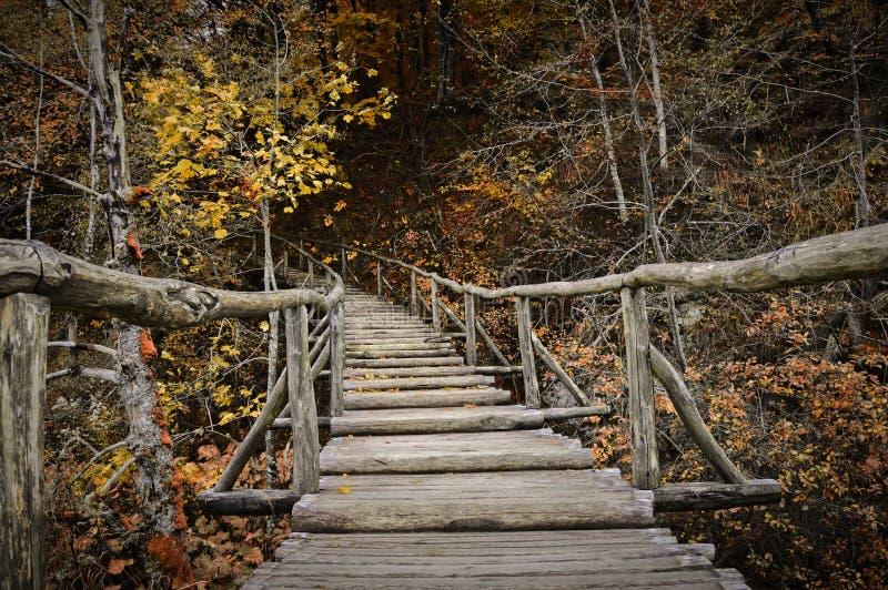 Bron till hösten royaltyfri bild