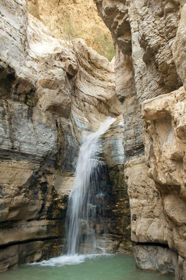 Bron van de mineraalwaterlente in nationaal park Ein Gedi royalty-vrije stock afbeeldingen