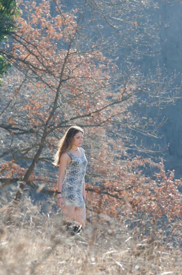 Bronde utanför i skogen royaltyfri foto