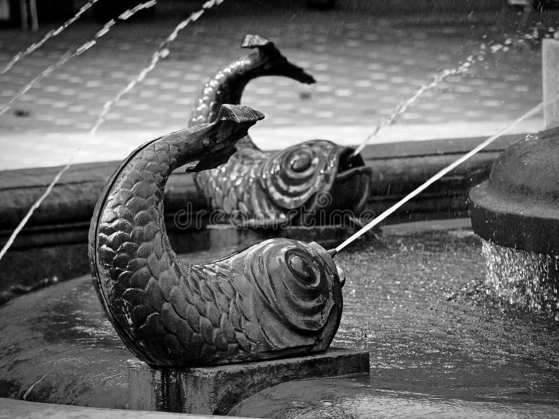 Brons fiskstatyer på fiskspringbrunnen i Victory Square, Timisoara, det Timis länet, Rumänien royaltyfri fotografi