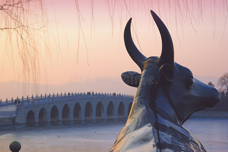 Bronze Ox royalty free stock images