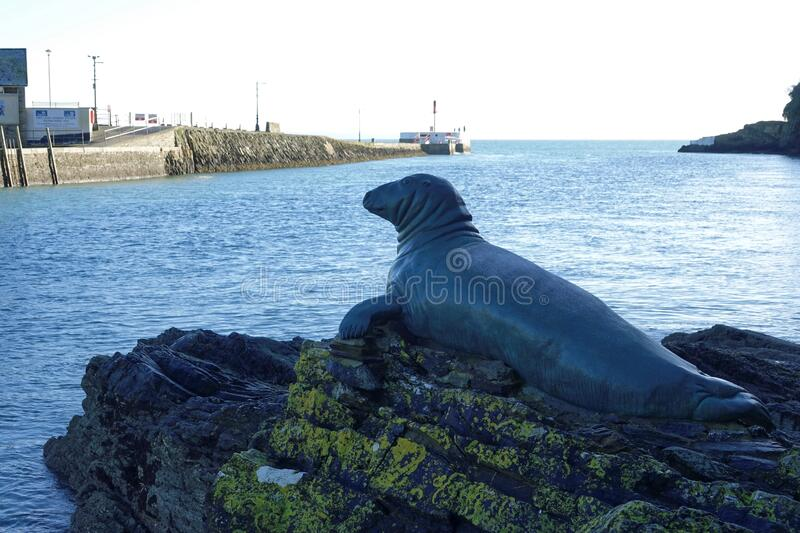 Looe England. Hector. Bronze statue of a seal that lived in harbour royalty free stock images