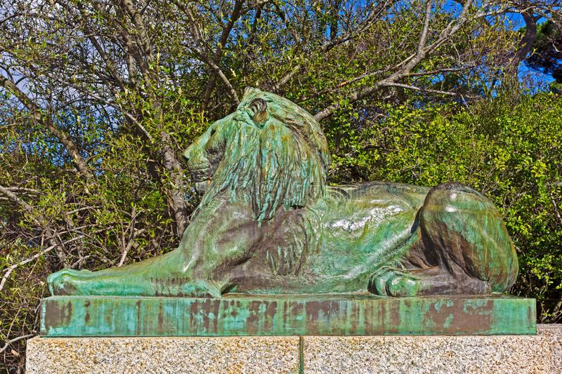 Bronze statue of a male lion stock image