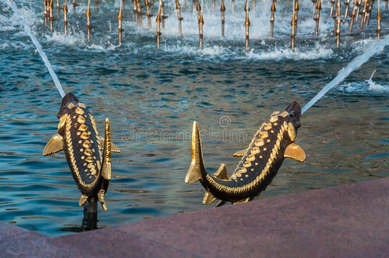Bronzezahlbrunnen von Störfischen im Pool des Steinblumen-Brunnens an VDNH stockfoto