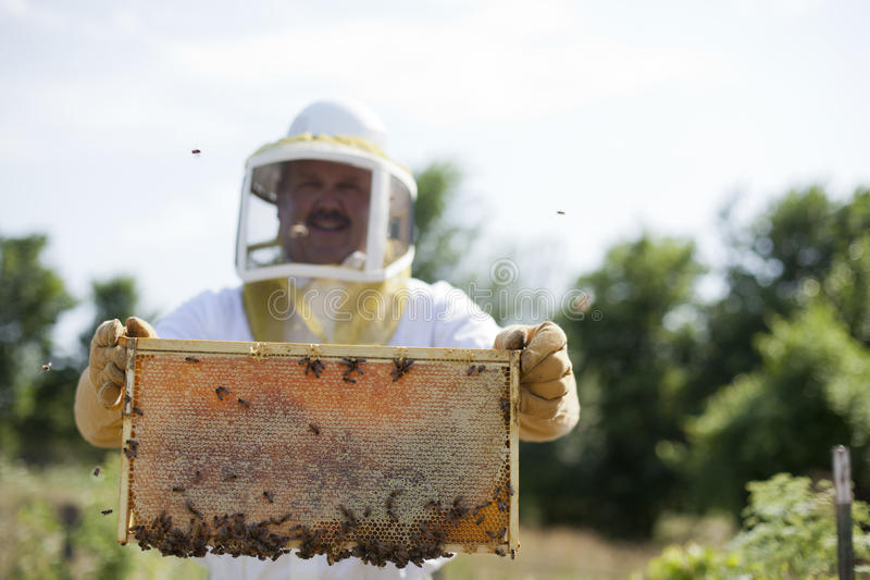 Brood and Honey. A man holds out his honeycomb and brood full of honey. Shallow depth of field royalty free stock photo