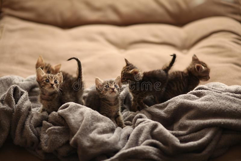 Brood of little cute kittens on blanket. Care in animal shelter stock images