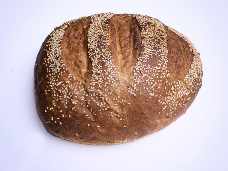 Broodmaïskolf stock foto