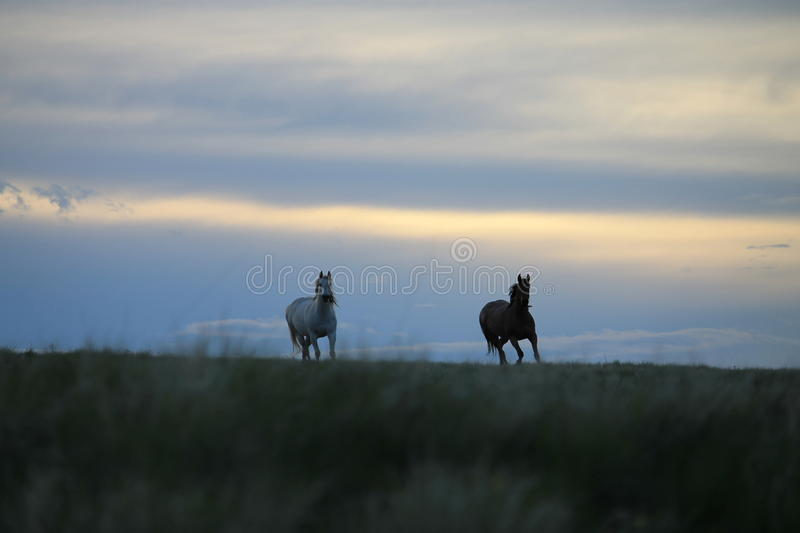Broodmares coming in stock photos