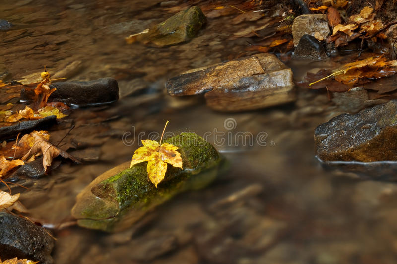 Download Brook stock photo. Image of motion, clean, yellow, autumn - 20652866