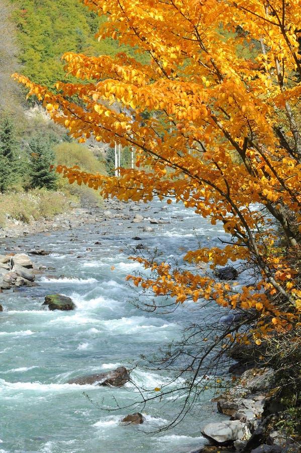 Brook. Beautiful autumn scenery of brook royalty free stock image