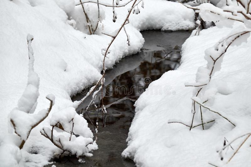 The brook flowing through the forest in winter stock photo