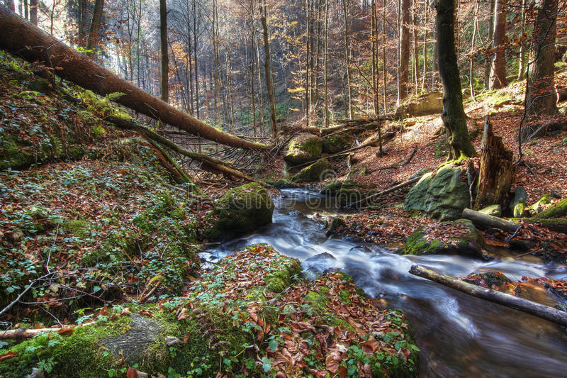 Download Brook in forest stock photo. Image of forest, abandoned - 26375220
