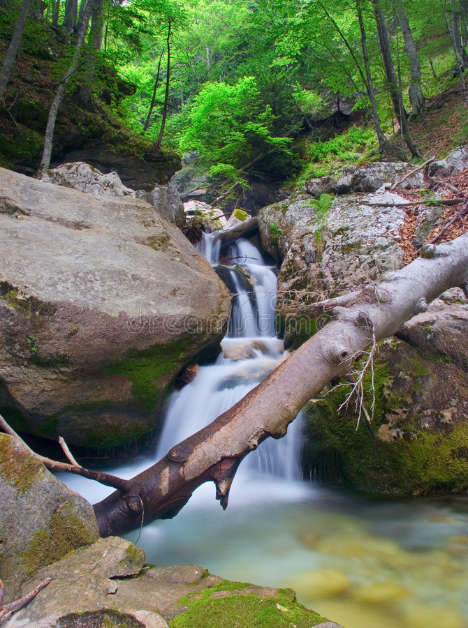 Download Brook in the forest stock photo. Image of chute, creamy - 514592